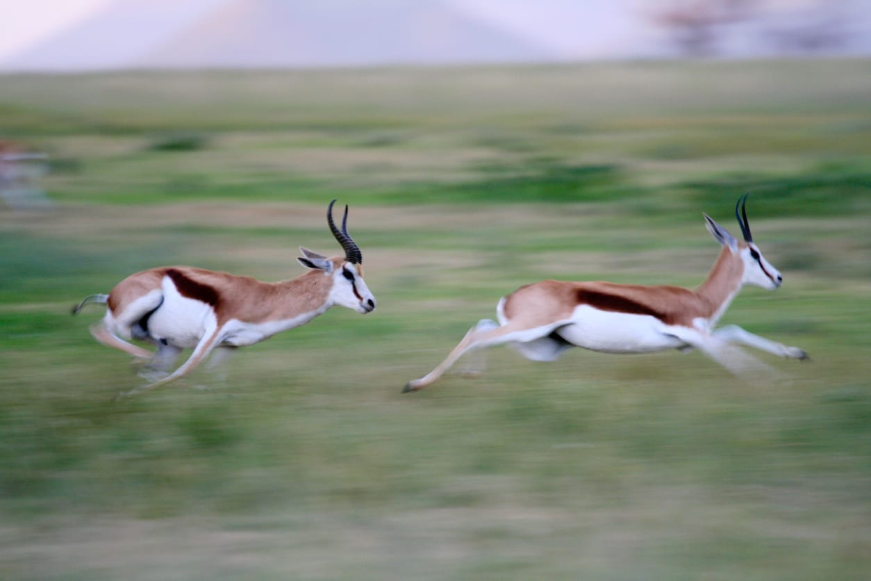 Is Your Company Agile Enough to Grow like a Gazelle?